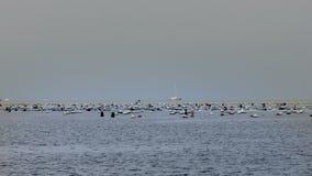Πανοραμικός παν πυροβολισμός του horizont που διασκορπίζεται με sailboats και τα σκάφη φιλμ μικρού μήκους