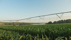 Πανοραμικός πυροβολισμός ποτισμένο cornfield απόθεμα βίντεο
