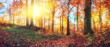 Πανοραμικό δασικό τοπίο φθινοπώρου στοκ εικόνα