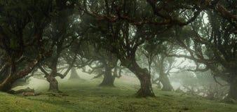 Πανοραμικό misty δάσος με το διάστημα αντιγράφων στοκ εικόνες με δικαίωμα ελεύθερης χρήσης