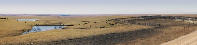 Πανοραμικό Vista της μεγάλης διεύθυνσης ενός αγροκτήματος πεδιάδων στοκ εικόνα με δικαίωμα ελεύθερης χρήσης