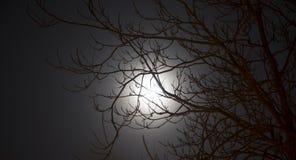 Πανσέληνος τη νύχτα Στοκ Φωτογραφία