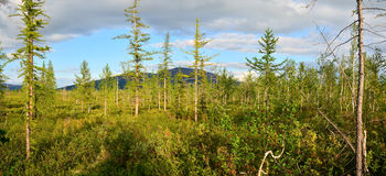 Πανόραμα ανατολικό σιβηρικό tundra στοκ φωτογραφίες με δικαίωμα ελεύθερης χρήσης
