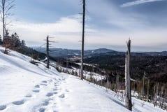 Πανόραμα βουνών χειμερινού Beskid Slaski κοντά στο λόφο Barania Gora στην Πολωνία Στοκ Φωτογραφίες