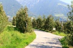 Πανόραμα δέντρων και βουνών της Apple στο Tirol κοντά σε Merano, νότιο Τύρολο Στοκ φωτογραφία με δικαίωμα ελεύθερης χρήσης