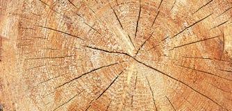 Πανόραμα ενός δέντρου σε ένα τμήμα Στοκ Εικόνες