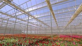 Πανόραμα ενός μεγάλου σύγχρονου θερμοκηπίου Μεγάλο φωτεινό θερμοκήπιο με μια διαφανή στέγη και ανθίζοντας λουλούδια απόθεμα βίντεο