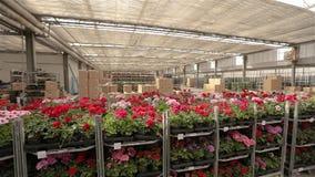Πανόραμα μιας μεγάλης αποθήκης εμπορευμάτων με τα ανθίζοντας λουλούδια, ροή της δουλειάς σε μια αποθήκη εμπορευμάτων ενός μεγάλου απόθεμα βίντεο