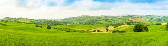 Πανόραμα του αγροτικού τοπίου στους θερινούς τομείς στα ιταλικά επαρχία της Ανκόνα στην Ιταλία Στοκ εικόνες με δικαίωμα ελεύθερης χρήσης