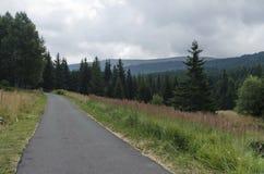 Πανόραμα του γραφικού δάσους με το δρόμο και το ξέφωτο, Vitosha βουνό Στοκ Εικόνες