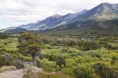 Πανόραμα του εθνικού πάρκου Alerces. στοκ εικόνες