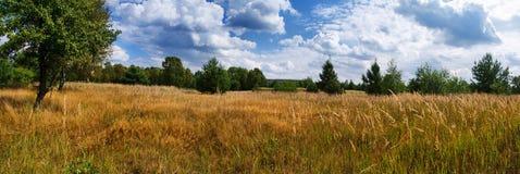 Πανόραμα του λιβαδιού και του δασικού δρόμου Στοκ φωτογραφία με δικαίωμα ελεύθερης χρήσης