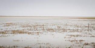 Πανόραμα του πλημμυρισμένου έλους floodlands στο Τέξας Στοκ εικόνα με δικαίωμα ελεύθερης χρήσης