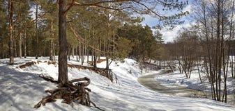 Πανόραμα του χειμερινού δασικού ποταμού Στοκ Εικόνες