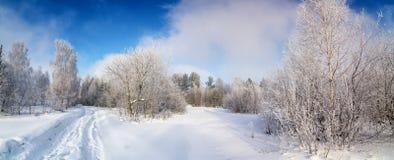 Πανόραμα του χιονισμένου δάσους με έναν βρώμικο δρόμο, Ρωσία, στοκ εικόνες με δικαίωμα ελεύθερης χρήσης