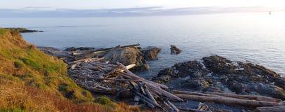 Πανόραμα του driftwood στην παραλία στοκ εικόνες