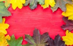 Πανόραμα των ζωηρόχρωμων φύλλων φθινοπώρου κίτρινος, πράσινος και καφετής Στοκ φωτογραφίες με δικαίωμα ελεύθερης χρήσης