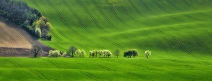Πανόραμα των κυμάτων τομέων με τα ανθίζοντας δέντρα Στοκ φωτογραφία με δικαίωμα ελεύθερης χρήσης