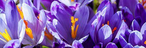Πανόραμα των λουλουδιών στοκ εικόνες