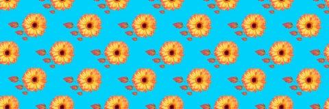 πανόραμα των όμορφων λουλουδιών gerbera και του δονούμενου backgro φύλλων Στοκ εικόνες με δικαίωμα ελεύθερης χρήσης