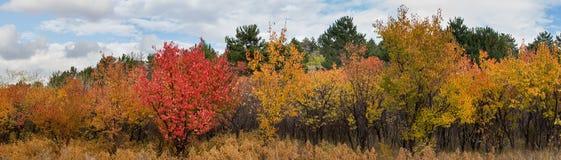 Πανόραμα χρωμάτων φθινοπώρου τοπίων φθινοπώρου Στοκ Φωτογραφίες