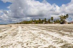 Πανόραμα Zanzibar Στοκ φωτογραφίες με δικαίωμα ελεύθερης χρήσης
