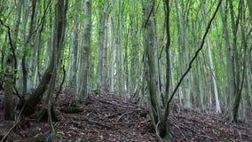 Παν άποψη σχετικά με ένα νέο πράσινο δάσος απόθεμα βίντεο