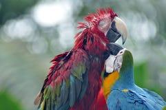 παπαγάλοι εύθυμοι Στοκ Εικόνες