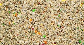 παπαγάλοι τροφίμων μικροί Στοκ Εικόνες