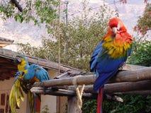 παπαγάλοι Στοκ Φωτογραφίες