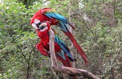 παπαγάλοι στοκ φωτογραφίες με δικαίωμα ελεύθερης χρήσης