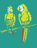παπαγάλοι διανυσματική απεικόνιση