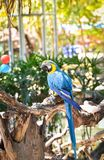 Παπαγάλος πουλιών Macaw Στοκ Εικόνες