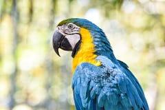 Παπαγάλος πουλιών Macaw Στοκ Φωτογραφία
