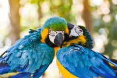 Παπαγάλος πουλιών Macaw Στοκ φωτογραφία με δικαίωμα ελεύθερης χρήσης