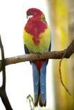 Παπαγάλος στο ζωολογικό κήπο Στοκ Εικόνες
