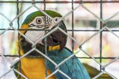 Παπαγάλος στο κλουβί Στοκ εικόνες με δικαίωμα ελεύθερης χρήσης