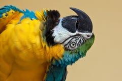 παπαγάλος Στοκ Φωτογραφίες