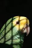 παπαγάλος στοκ εικόνα με δικαίωμα ελεύθερης χρήσης