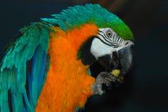 παπαγάλος στοκ εικόνες με δικαίωμα ελεύθερης χρήσης