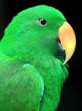 Παπαγάλος στοκ εικόνες