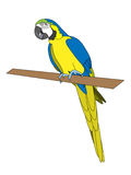 παπαγάλος διανυσματική απεικόνιση
