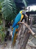 Παπαγάλος macaw Στοκ Εικόνες