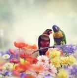 Παπαγάλοι ουράνιων τόξων (ουράνιο τόξο Lorikeet) Στοκ φωτογραφία με δικαίωμα ελεύθερης χρήσης