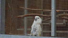 Παπαγάλοι σε ένα παιχνίδι κλουβιών φιλμ μικρού μήκους