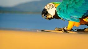 Παπαγάλοι στην Ταϊλάνδη Στοκ Εικόνα