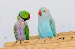 παπαγάλοι δύο Στοκ φωτογραφία με δικαίωμα ελεύθερης χρήσης