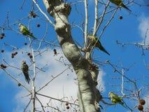 παπαγάλοι στοκ φωτογραφία