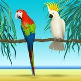 Παπαγάλοι, Cockatoo, ρεαλιστικά πουλιά που κάθονται στο τροπικό υπόβαθρο κλάδων με την παραλία και τη θάλασσα Στοκ φωτογραφία με δικαίωμα ελεύθερης χρήσης