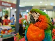 Παπαγάλοι macaws μπλε, κίτρινοι, χαριτωμένοι και φωτεινοί Στοκ Φωτογραφία